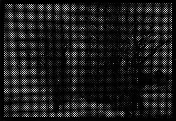 Black Trees X, 2008