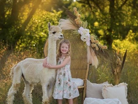 Frisco & McKinney Family Photographer-Alpaca Mini Session