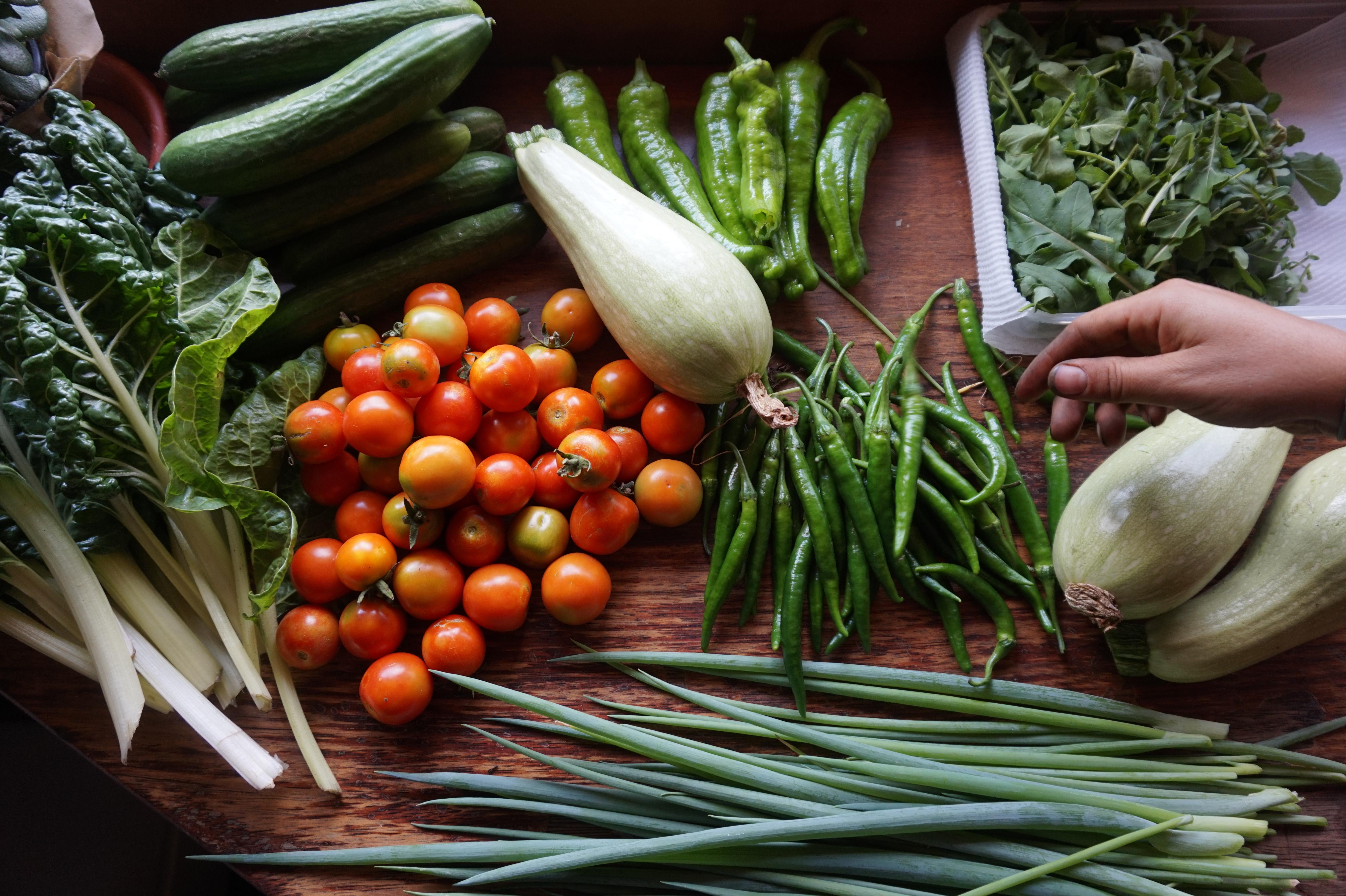 Coming Soon: Food Security Workshops