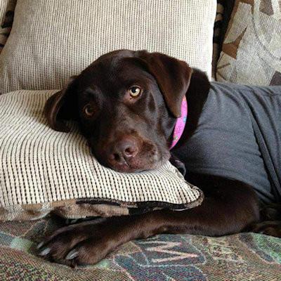 sassy relaxing in her Calming Collar
