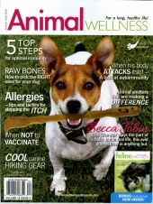 Calming Collars | in Animal Wellness
