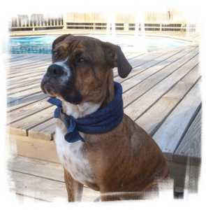 leo in his Calming Collar