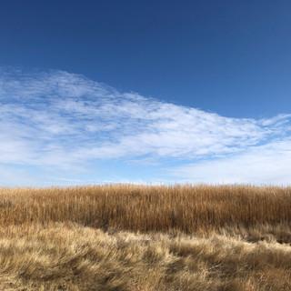 Rick-Cotter-Landscape_0400.JPG