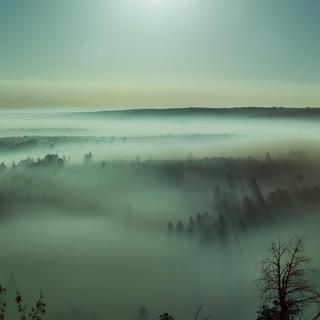 Fog-BG-24.jpg