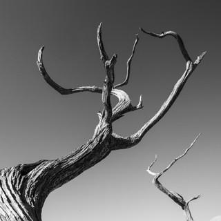 RBC-Wood-3094.jpg