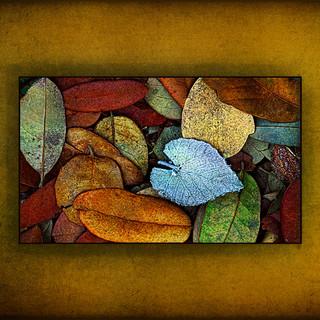 Icy_Heart_of_Autumn.jpg