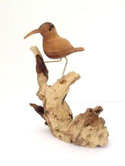 Daphne - Double Collared Sunbird in Wild Olive & Mopani