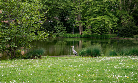 Stuttgart City Park. Germany