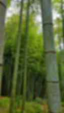 bamboo testimonials.jpg