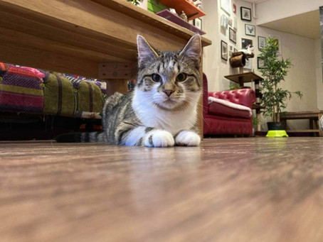 A Kitty Café Guide To Getting Your First Cat