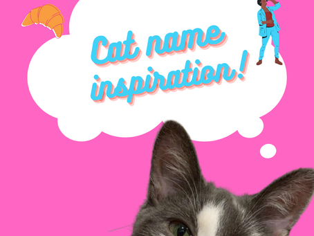 How to name your new kitty!