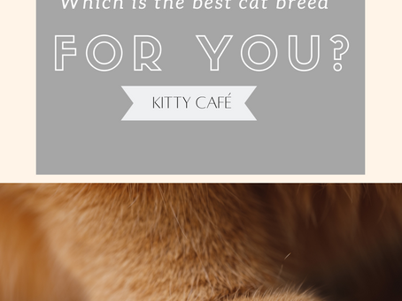 Which is the best cat breed for you?