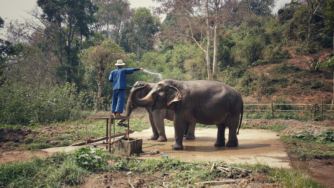 Elephants in Thailand March 2017