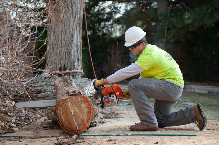 tree-removal-dan-web-op.jpg