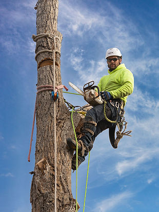 Colorado-tree-service-care.jpg