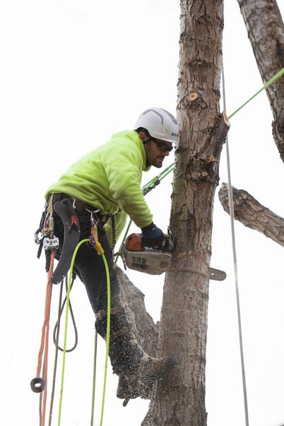 tree-cutting-denver.jpg