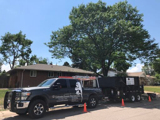 truck littleton tree.jpeg