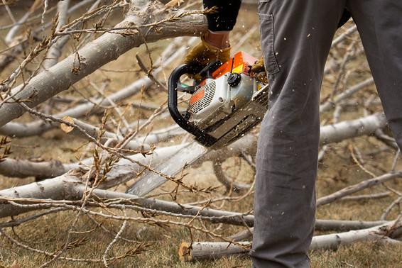 chain-saw-colorado-premier-tree-care.jpg