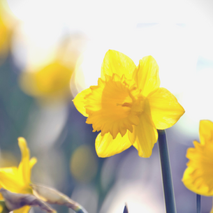 Mothering Sunday, 14th March 2021
