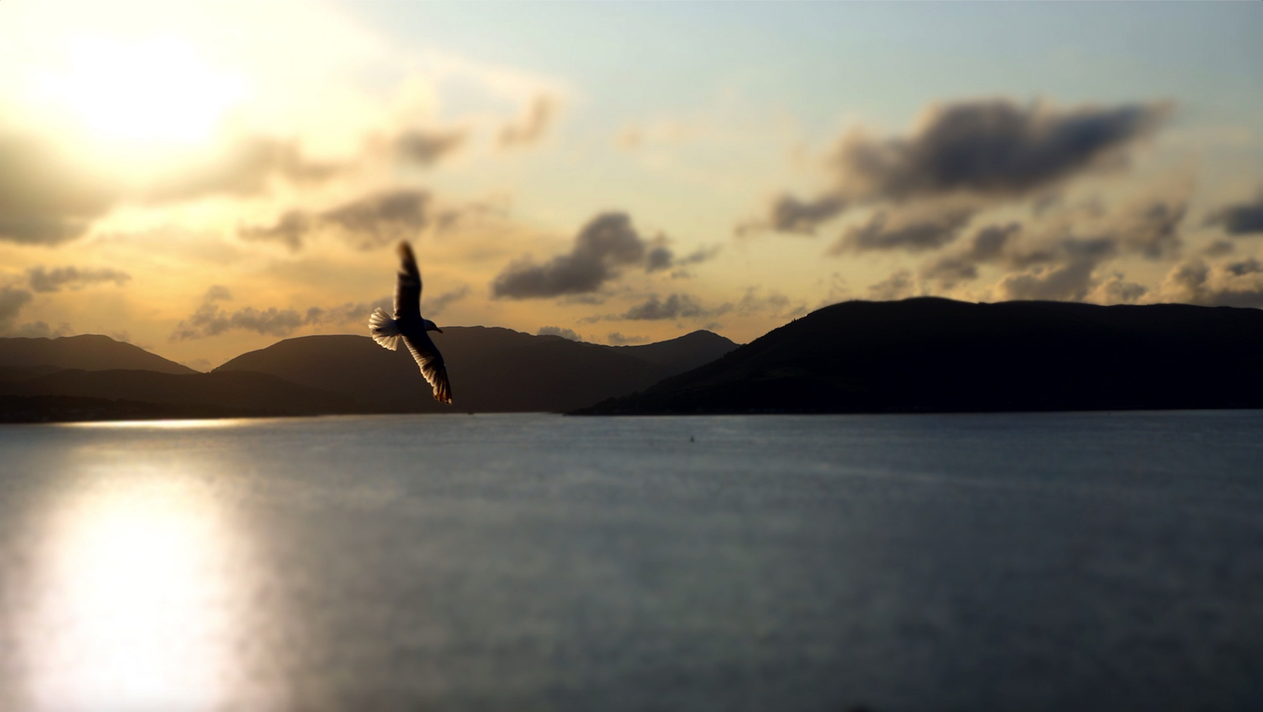 Buy-River-Clyde-View-Seagull-Sunset-Spec