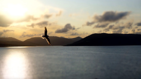 Sunset Gull ...
