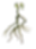 Bowtruckle.png