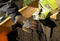 joanne dividing perennials fertilize.jpg