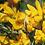 Thumbnail: Mascarilla Reutilizable Flor de Toxo