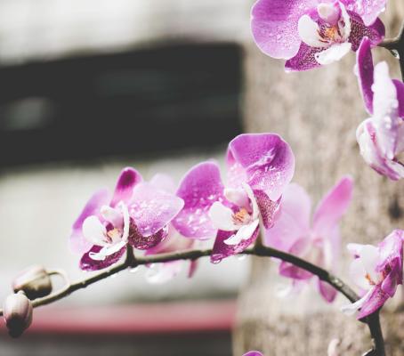 """Hoa lan không cần nhiều phân bón nhưng cần sự """"bảo bọc"""" tự nhiên"""