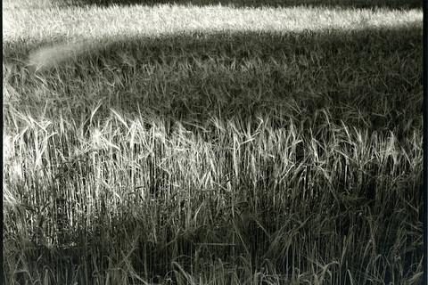 Nicholas Nixon, Loumarin, France, 2012