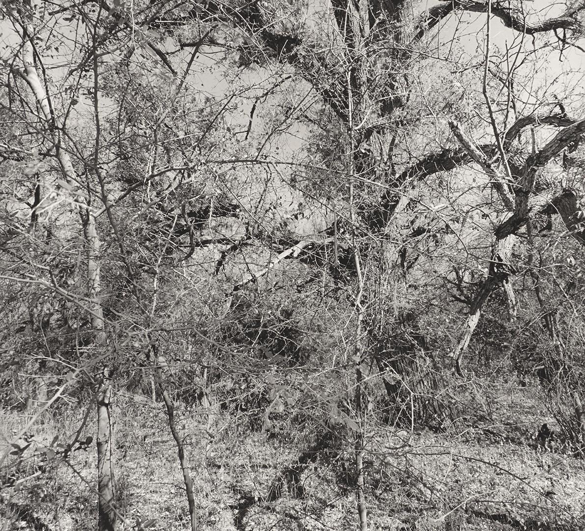 Lee Friedlander, Muleshoe Ranch Preserve, Arizona, 1999
