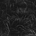 Harry Callahan, Grasses, Wisconsin, 1959