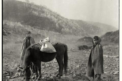 Adou, Boys and Donkey, 2006