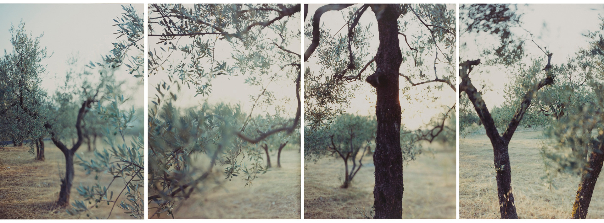 JoAnn Verburg, Olive Trees After The Heat, 1998