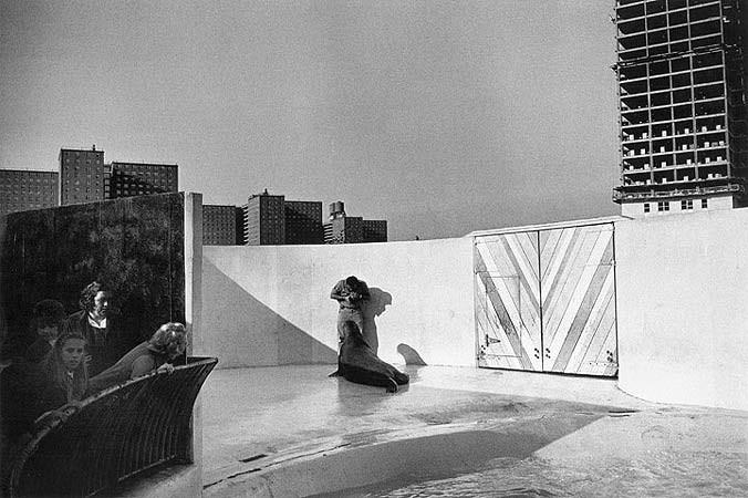 Garry Winogrand, Aquarium at Coney Island, New York, 1962