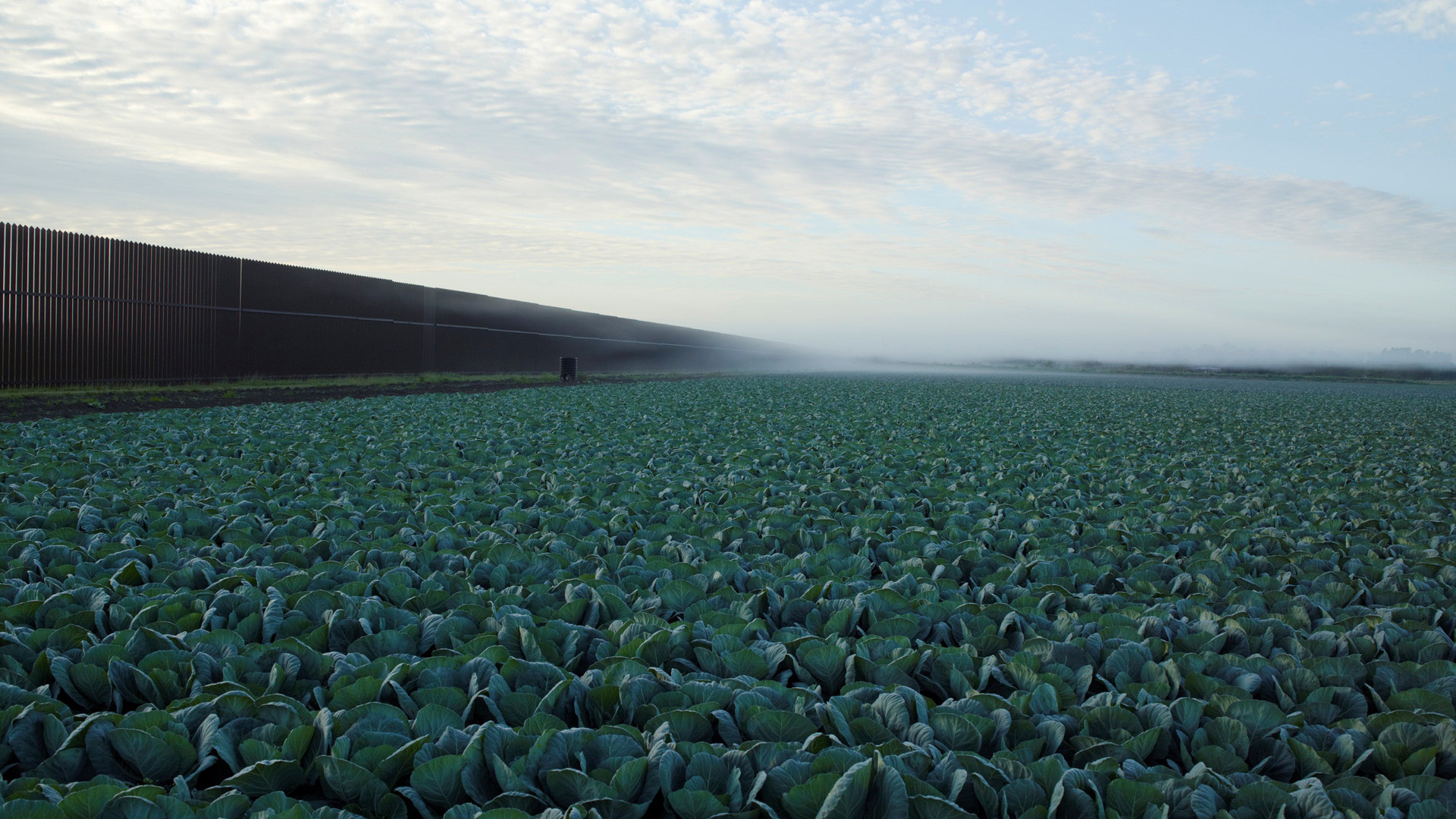 Richard Misrach, Cabbage Crop Near Brownsville, Texas, 2015