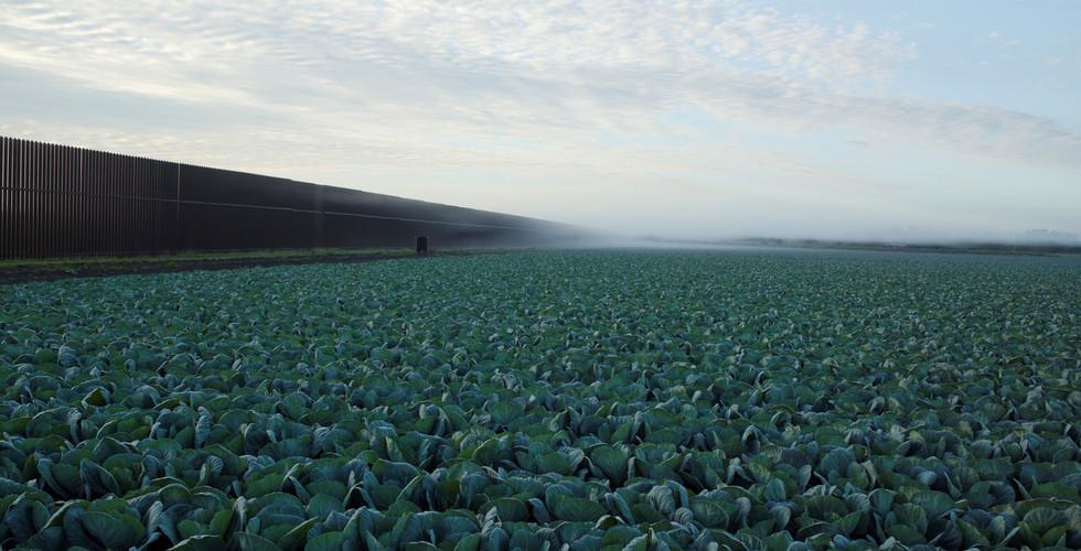 Richard Misrach, Cabbage Crop Near Brownsville, Texas, 2015