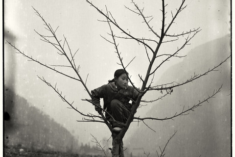 Adou, Girl in Tree, 2006