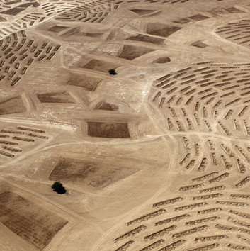Fazal Sheikh, Desert Bloom 5, 2011