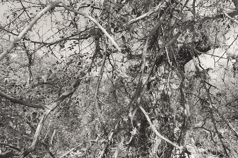 Lee Friedlander, Aravaipa Creek Preserve, Arizona, 1999