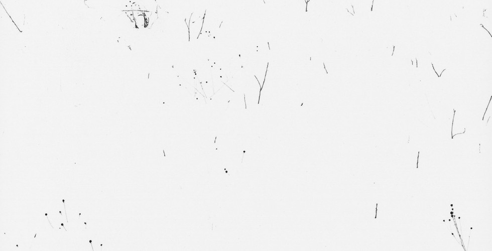 Harry Callahan, Weeds in Snow, Providence, 1965
