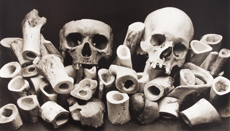 Irving Penn, Bone Forest, New York, 1980
