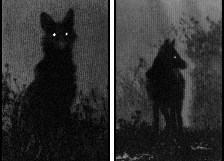 Michal Rovner, Dark Shadows, 2016