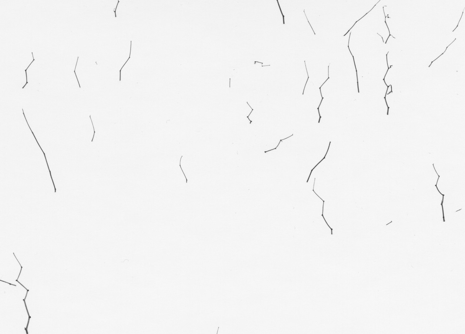 Harry Callahan, Weeds in Snow, Providence, c. 1964
