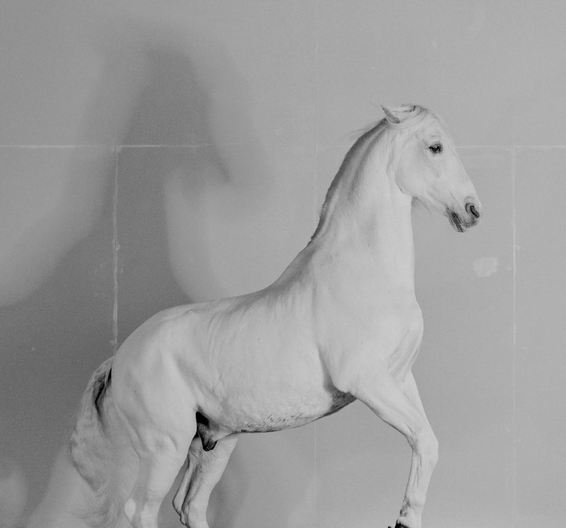Richard Learoyd, 7 Horses (Horse 1), 2017