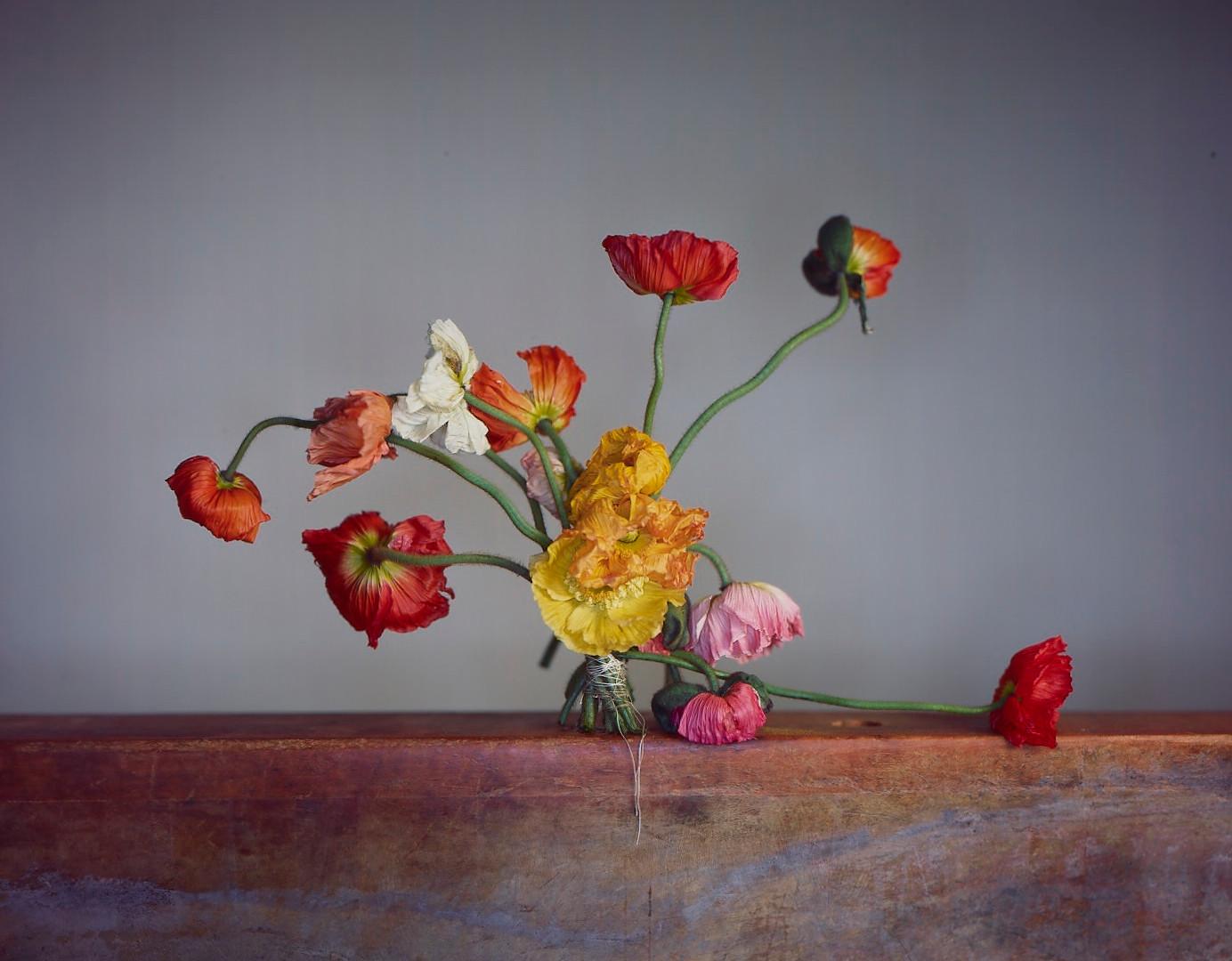 Richard Learoyd, Full Bloom Poppies (Eccentric), 2018