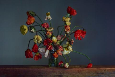 Richard Learoyd, Flowers, Day 3, 2019