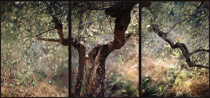 JoAnn Verburg, Under the Rocca, 2002