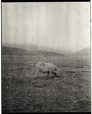 Adou, Landscape with Pig, 2006