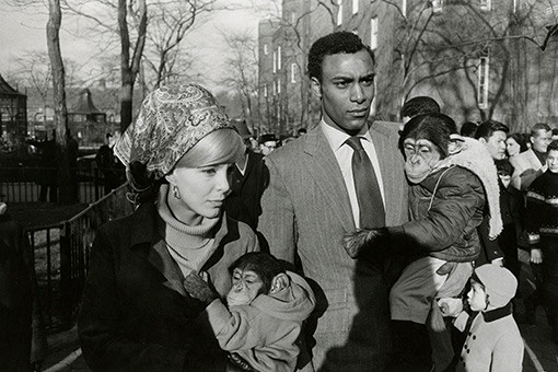 Garry Winogrand, Central Park Zoo, New York, 1967